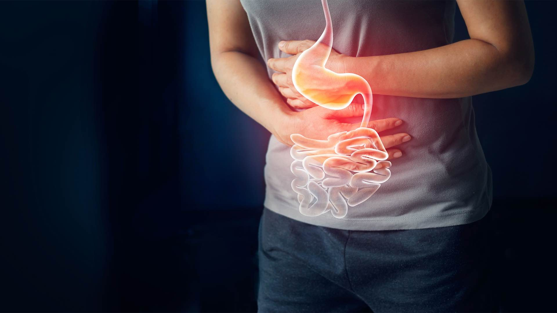how the brain and gut are connected