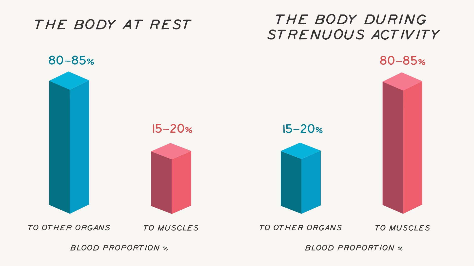 direction of blood at rest versus exercising